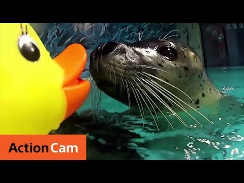 Action Ducks on RC Submarines Meet Sea Animals | Action Cam | Sony