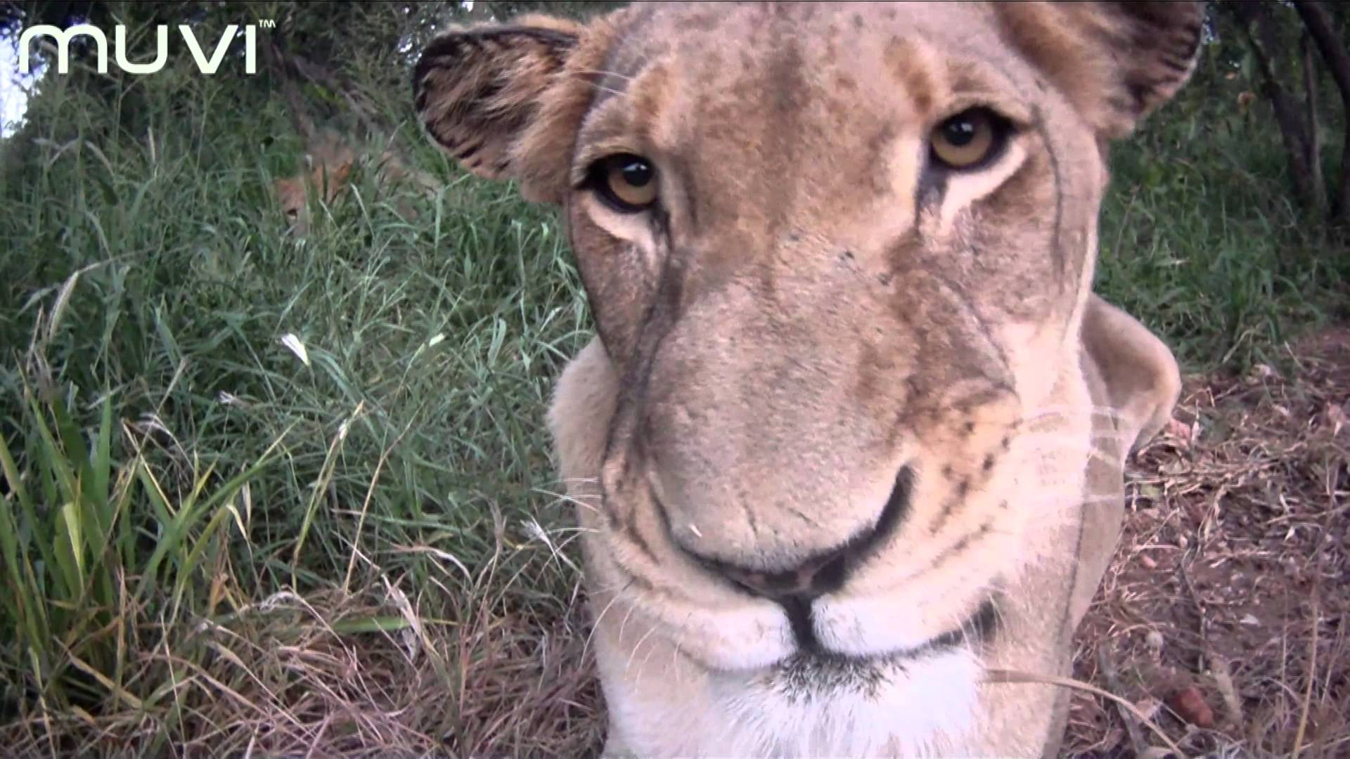 Veho MUVI HD: South African Safari – Close Up