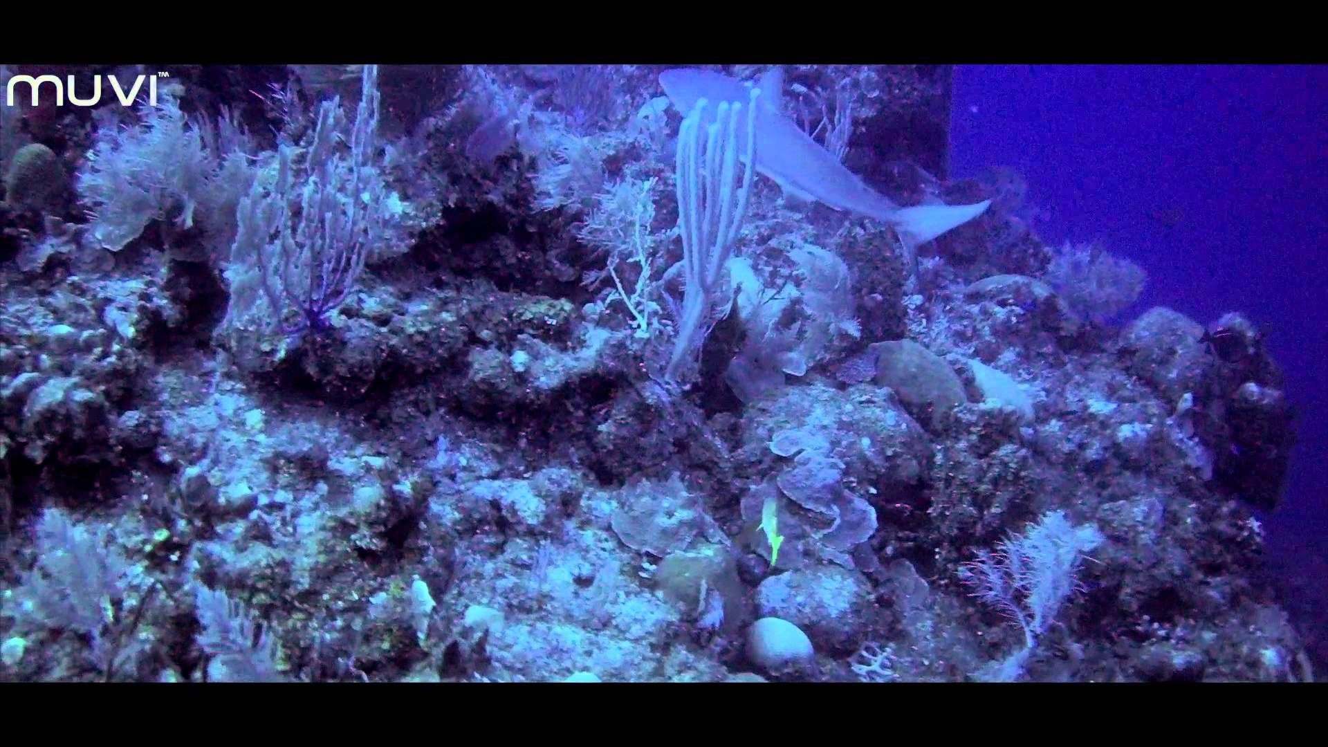 Veho MUVI HD hands free action camera: Cayman Islands – Scuba Diving