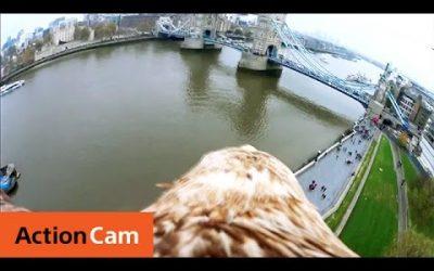 The London Tower Bridge Eagle POV   Action Cam   Sony