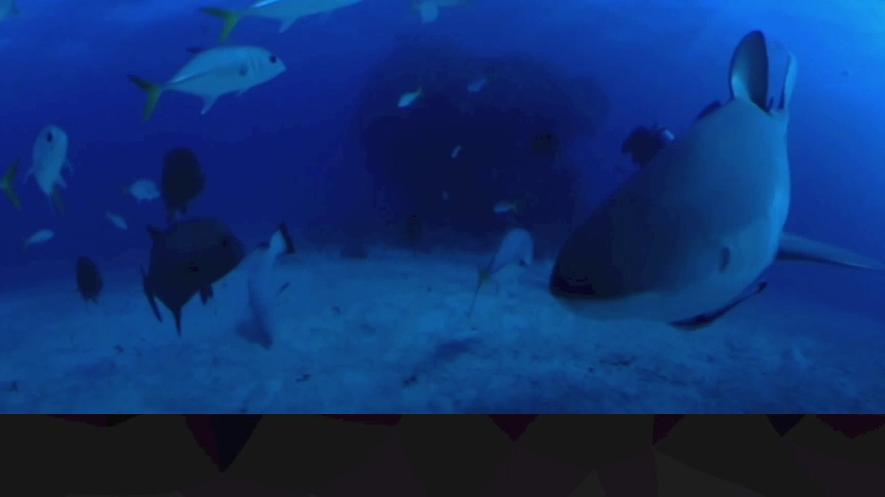 360fly: Swimming with the sharks