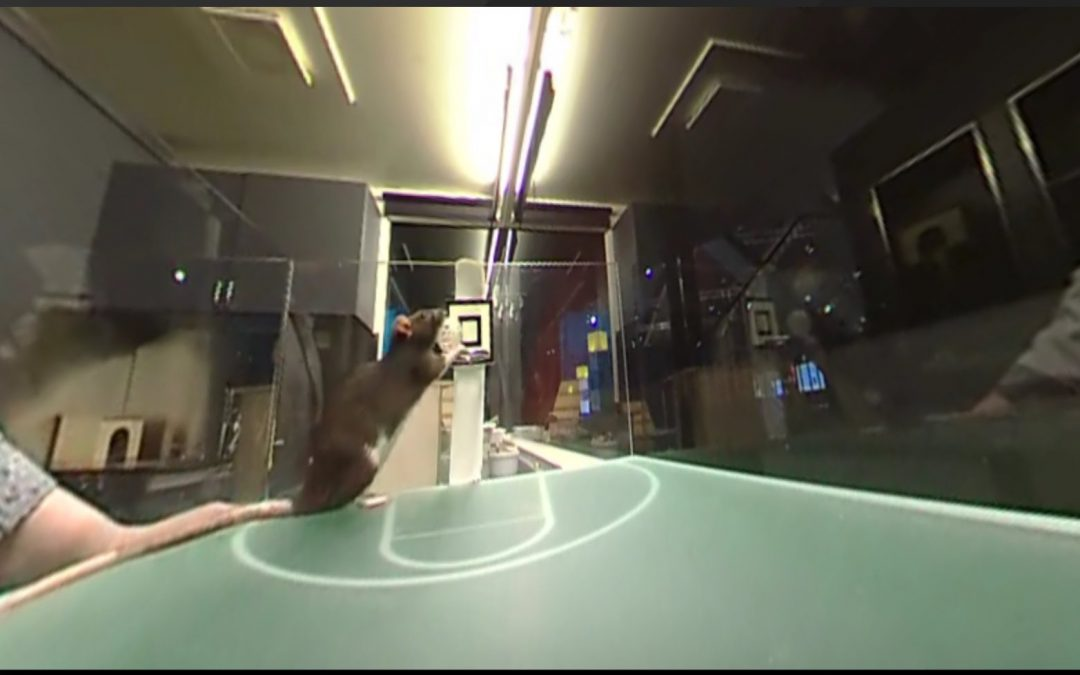 360fly: Mice Playing Basketball