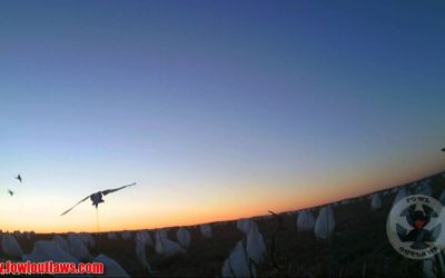 WASPcam Pro Staff – Introducing Fowl Outlaws