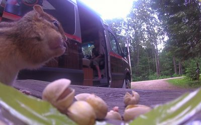 Chipmunk gets stung by a WASPcam
