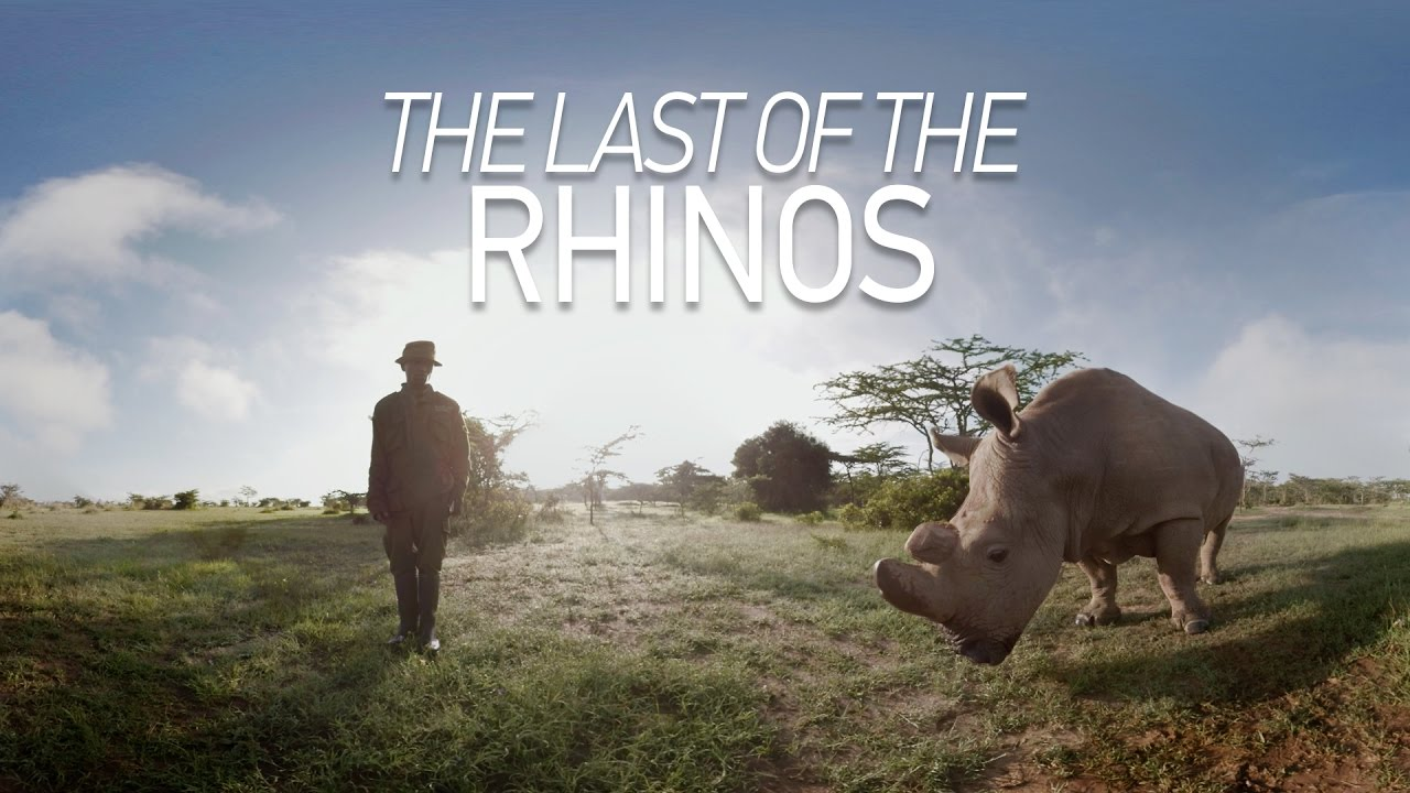 GoPro VR: The Last of the Rhinos