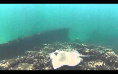 Scuba Diving with WASPcam