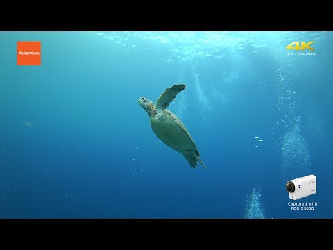 Action Cam | Underwater Exploring in Palau – 4K | Sony