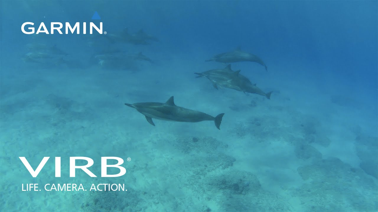 Garmin VIRB: Snorkeling in Hawaii