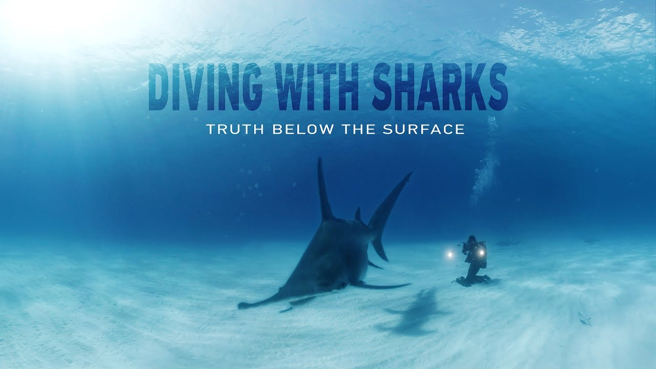 GoPro VR: Diving with Sharks – Truth Below the Surface