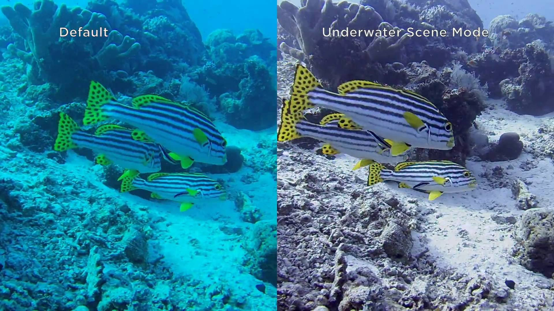 Underwater Scene Mode