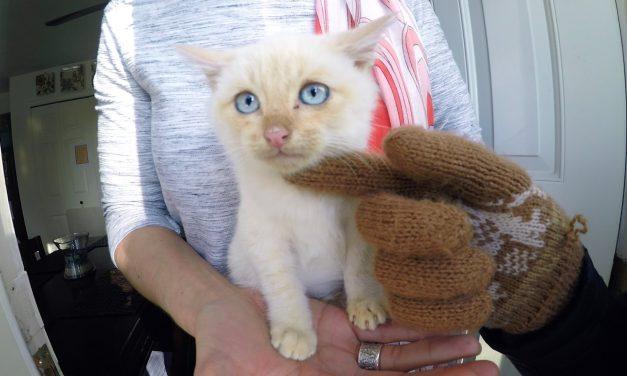 GoPro Awards: Frozen Kitten Lives