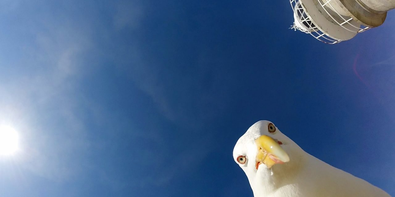 GoPro: Seagull Stole My GoPro