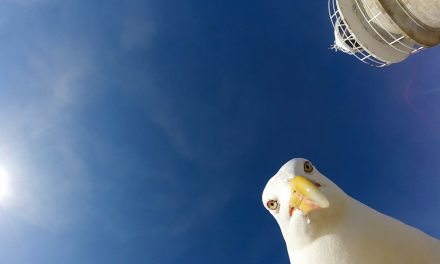 GoPro: Seagull Stole My GoPro