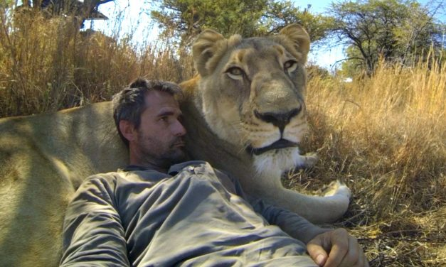 GoPro: Lions – The New Endangered Species?