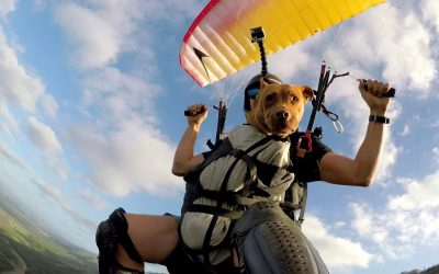 GoPro: Dog Sophie Glides Down a Hawaiian Mountain