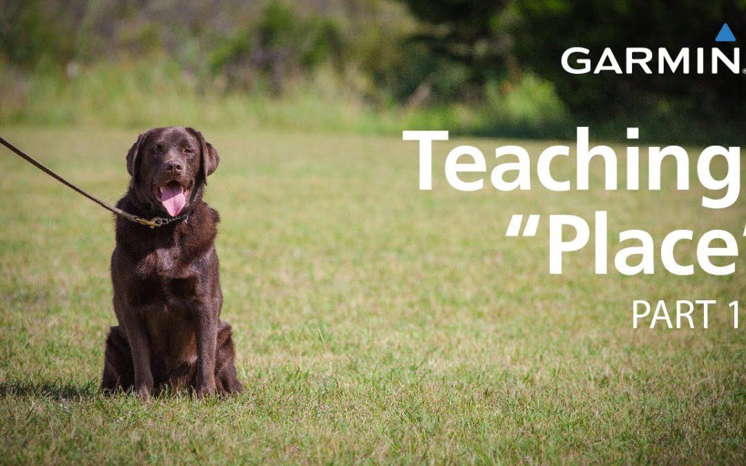 "e-Collar Training with Garmin: Teaching ""Place,"" Part 1"