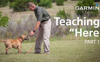 "e-Collar Training with Garmin: Teaching ""Here"" or ""Come,"" Part 1"