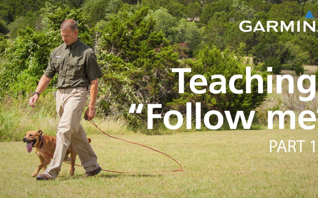 "e-Collar Training with Garmin: Teaching ""Follow Me"" and Collar Conditioning, Part 1"