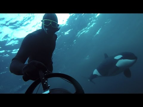 GoPro Awards: Freediving with Wild Orcas