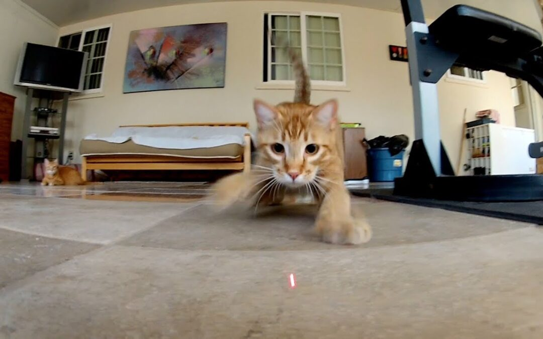 GoPro: Laser Cats – TV Commercial