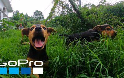 GoPro: National Dog Day