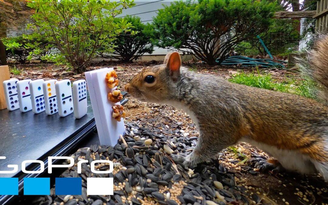 GoPro Awards: The Squirrel Feeding Machine